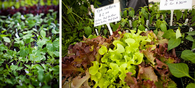 Clintonville-Farmers-Market-Columbus-2011-Leafy-Greens