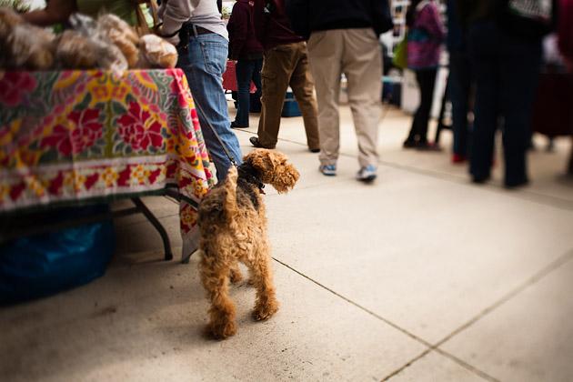 Clintonville-Farmers-Market-Columbus-2011-Dog