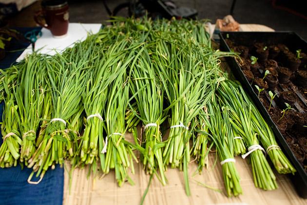 Clintonville-Farmers-Market-Columbus-2011-Garlic-Greens