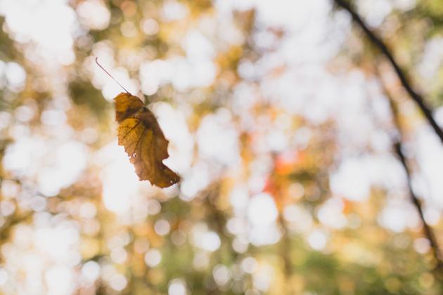 Autumn-Falling-Leaf-Columbus-Ohio-Wedding-Camp-Mary-Orton